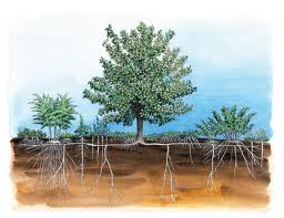 Tree and Forest Structure of and Edible Forest Garden